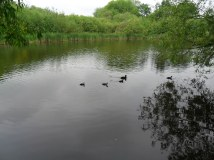 A family of coots were nesting nearby but we were careful not to disturb them.