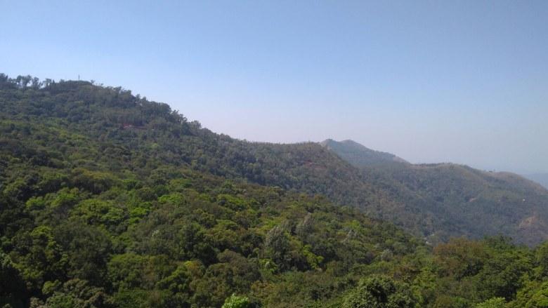 Forest of Kemmangundi