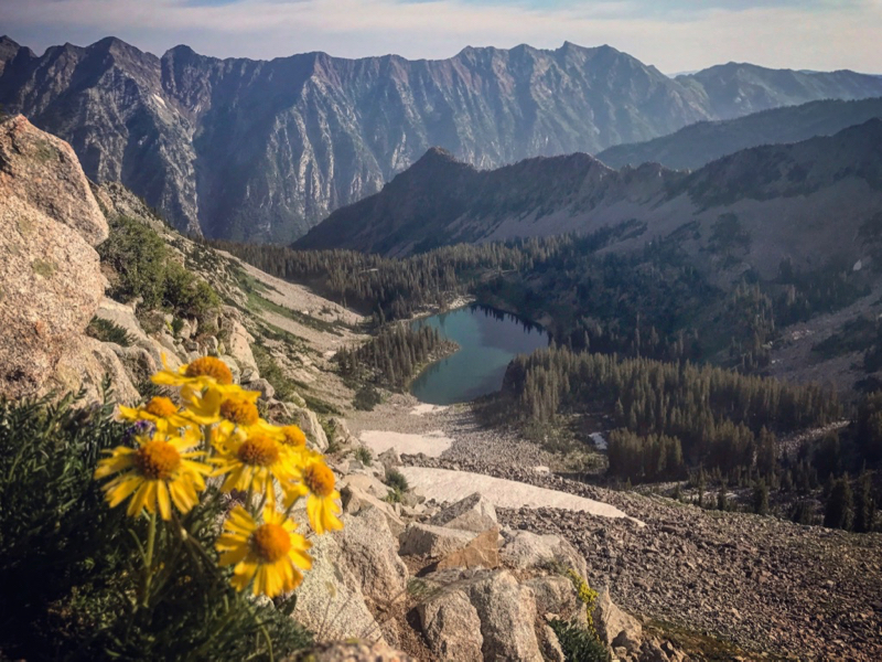 Red Pine Lake Wasatch Wildflowers