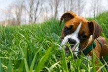 Barks-n-purrs-dog-walking