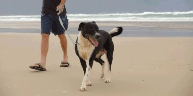 dog-walking1