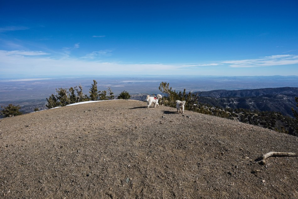 Mt. Baden Powell via Vincent Gap