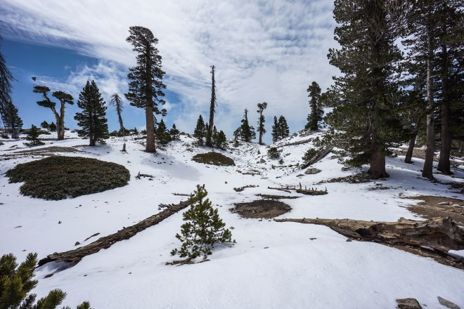 Mt. Baldy via Ski Hut Trail