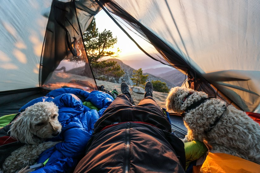 How To Start Hiking And Backpacking With Your Dog - Trail to