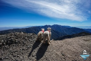 Mt Baden Powell Vincent Gap With Dogs