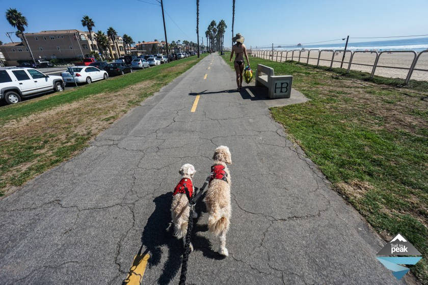 Goldendoodles At Huntington Dog Beach