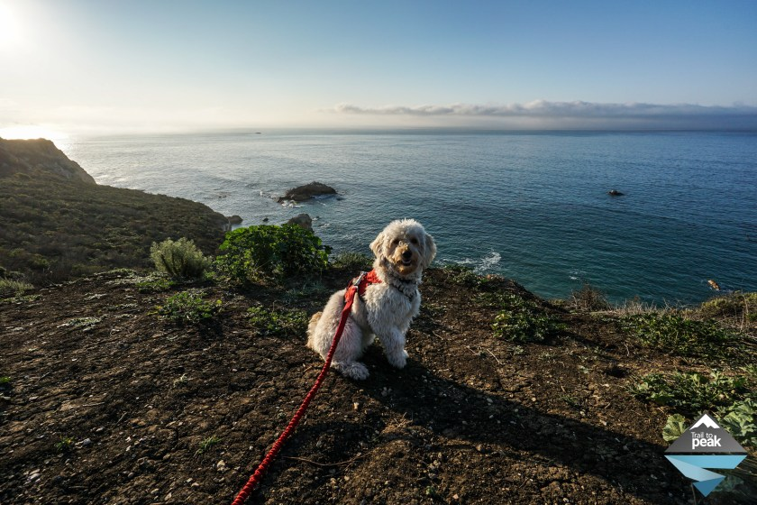 How To Start Hiking And Backpacking With Your Dog