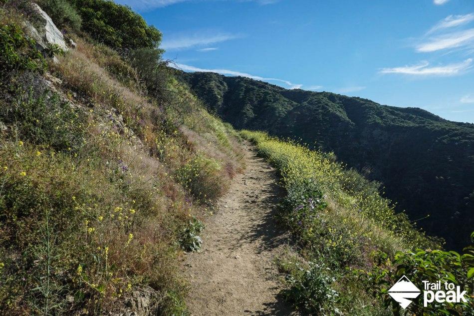 Hiking Bastard Ridge To Jones Peak, Hastings Peak, And Mt. Wilson