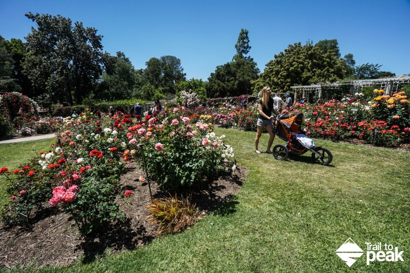 The Huntington Rose Gardens
