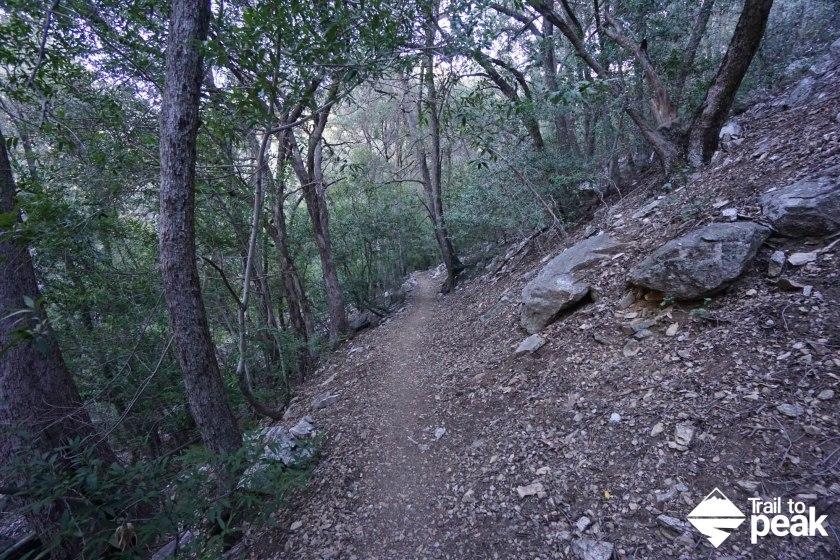 Hiking Mt Baldy via Bear Canyon Old Mt. Baldy Trail