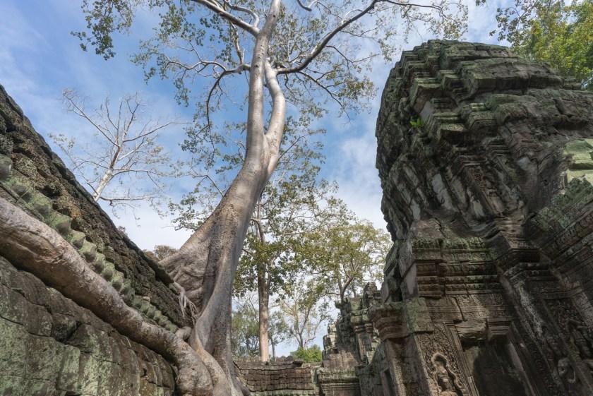 5 Reasons to Visit Siem Reap Cambodia Ta Prohm