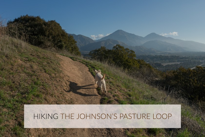 Hiking The Johnson's Pasture Gale Mountain Loop