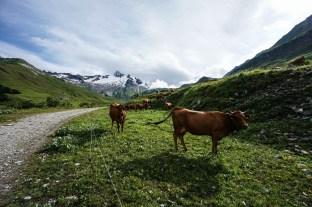 Tour_Du_Mont-Blanc_Photos-32