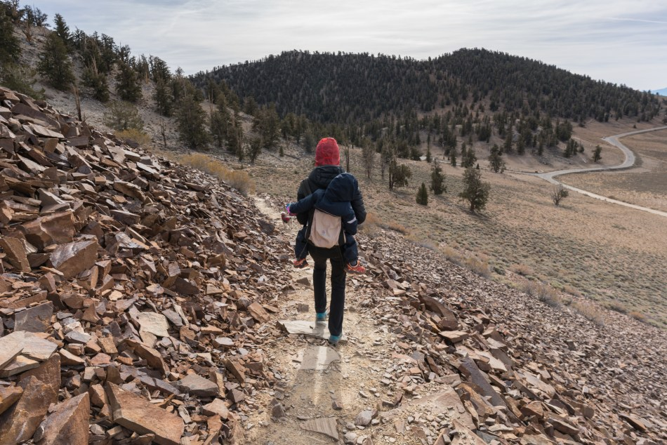 Hiking The Discovery Trail At The Ancient Bristlecone Pine Forest - Bishop, CA