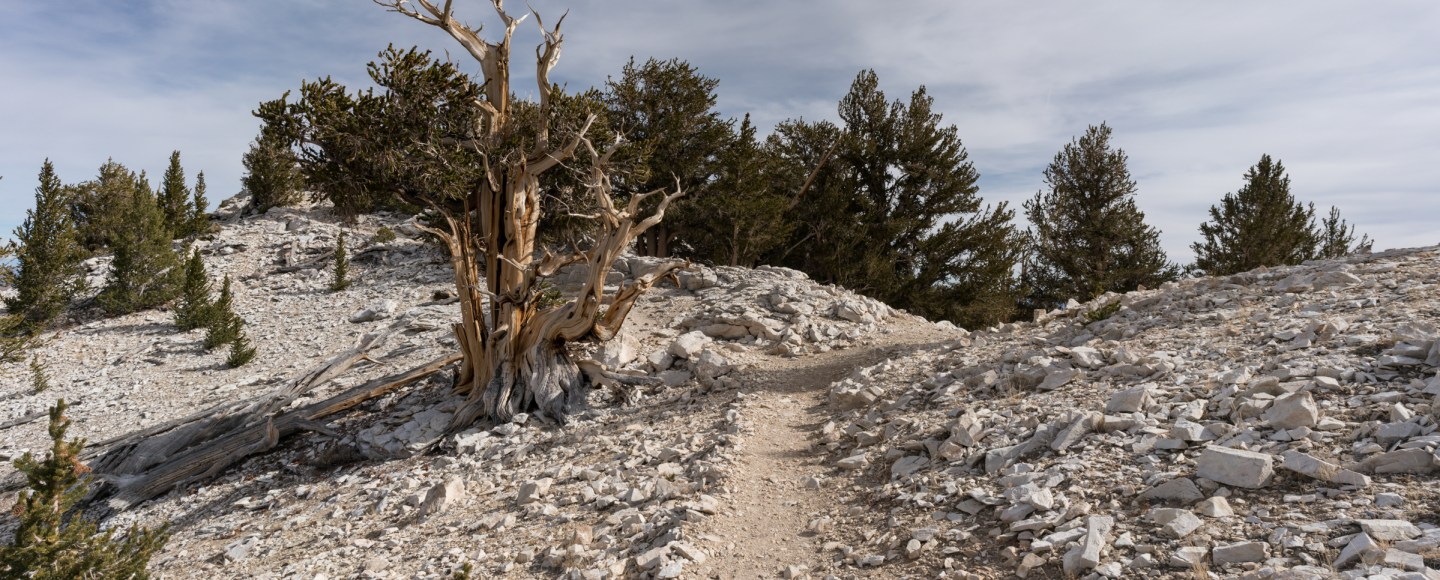Hiking Around Patriarch Grove In The Ancient Bristlecone Pine Forest - Bishop, CA
