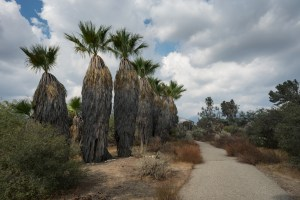 A Walk Around The Rancho Santa Ana Botanic Garden – Claremont, CA