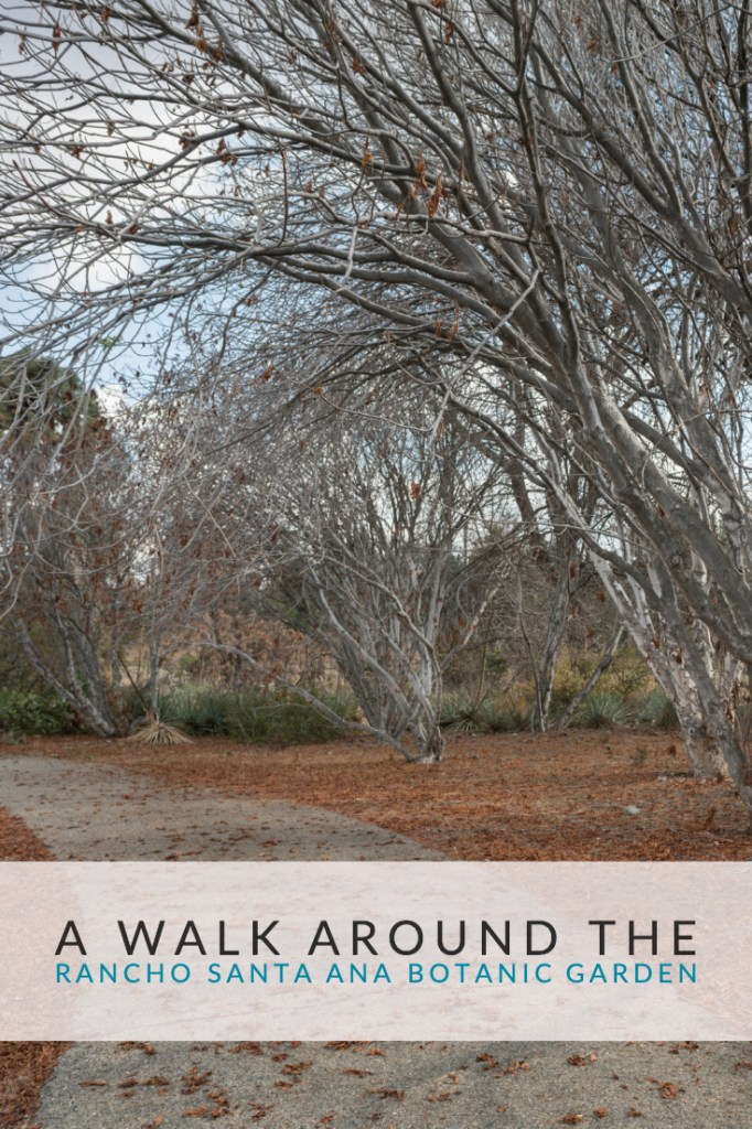 A Walk Around The Rancho Santa Ana Botanic Garden - Claremont, CA