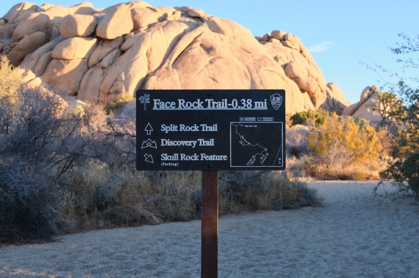 Camping at Jumbo Rocks in Joshua Tree NP and Hiking to Skull Rock, Face Rock, and Split Rock
