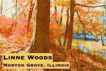 Linne Woods