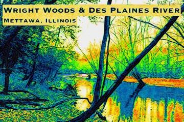 Wright Woods Thumbnail