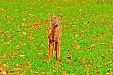 Miami Woods Deer 1
