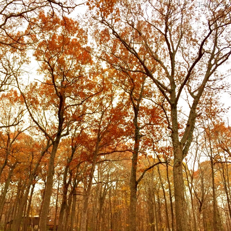 Wright Woods Trees
