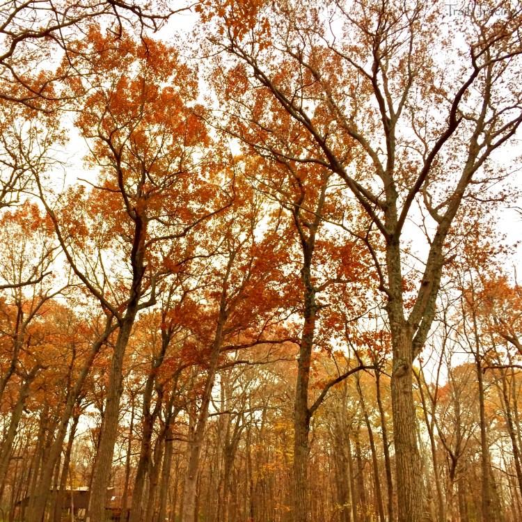 Wright Woods Trees