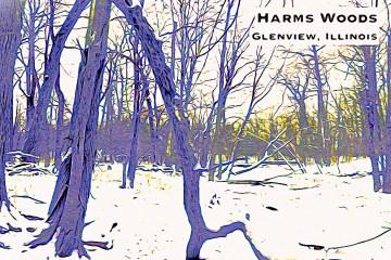 Harms Woods Thumbnail