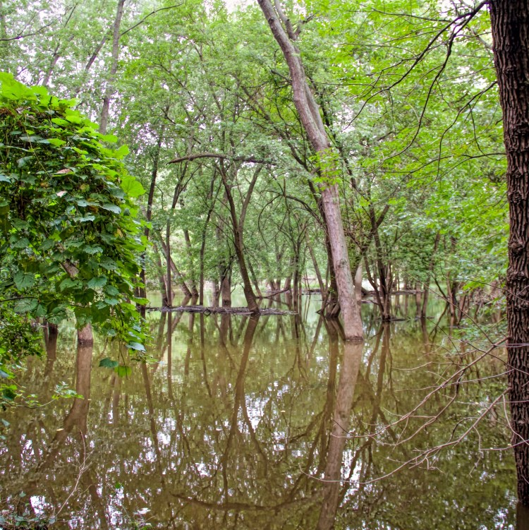 Thatcher Woods Floodplain