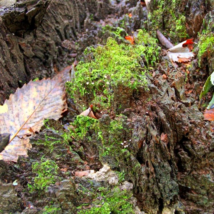 Half Day Lichen