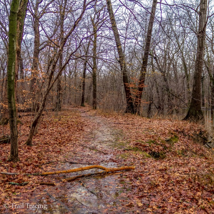 Harms Woods Trail