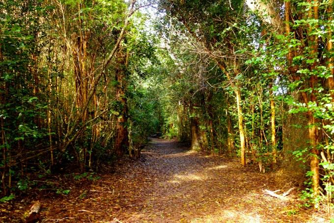 ハワイカウアイ島ヌアロロトレイル雨上がりの樹林帯