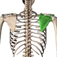 肩甲骨,可動性,パーソナルトレーナー,勉強会
