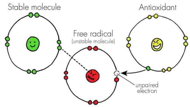 antioxidants how do they work