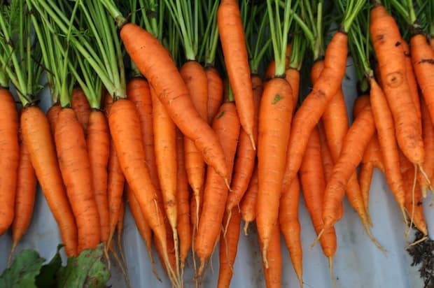 carrots superfood