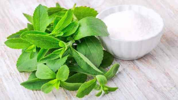 stevia is good for you