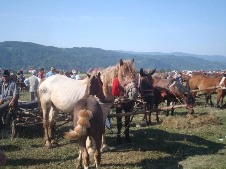 Horses for sale at the livestock market