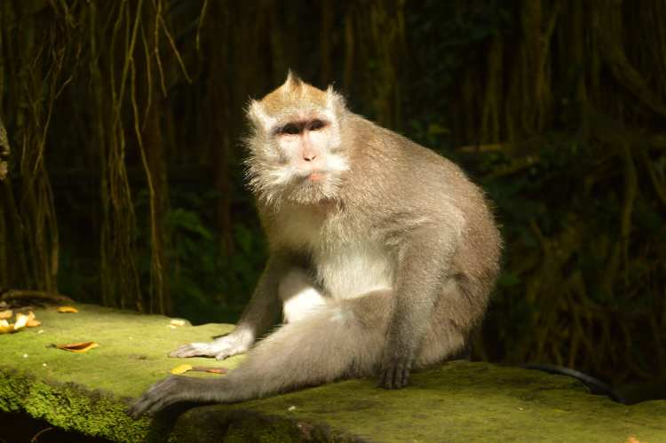 Bali monkey forest featured image