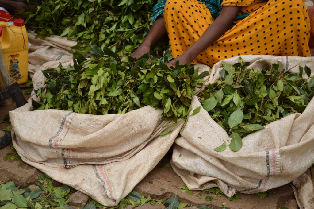 Khat is the Horn of Africa's drug of choice