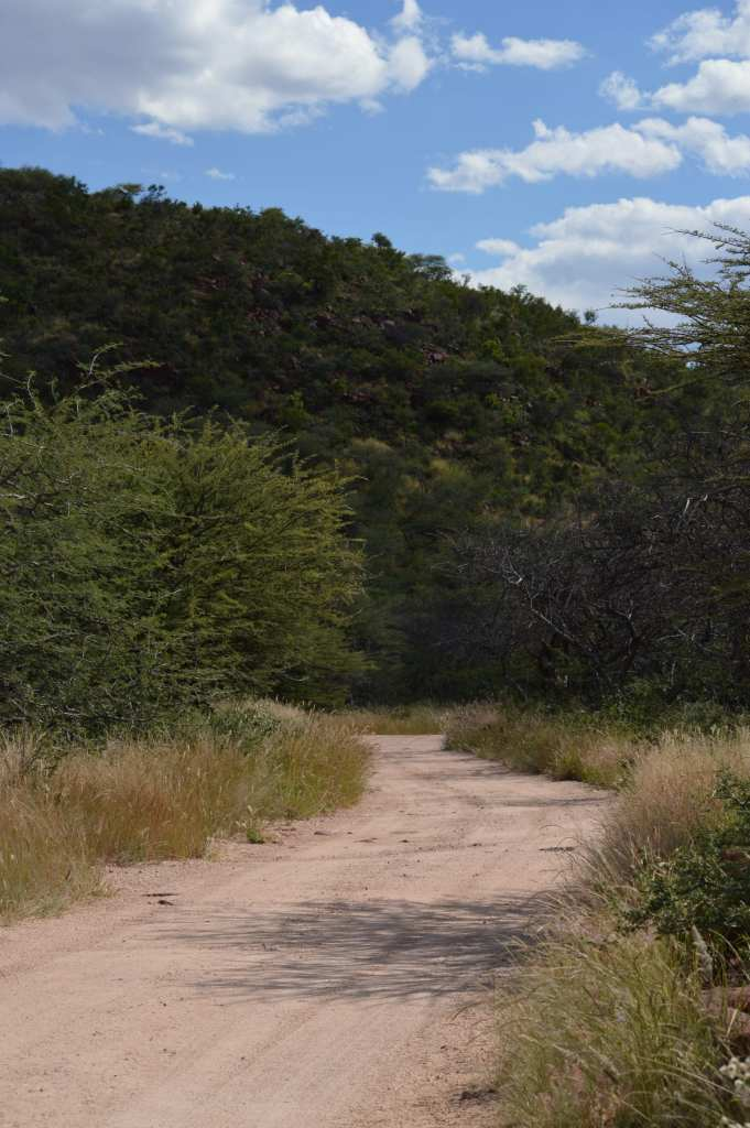 The road to the campsite at Okonjima...way out in the bush