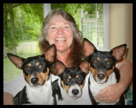 Sue Lee with her three Decker Terriers