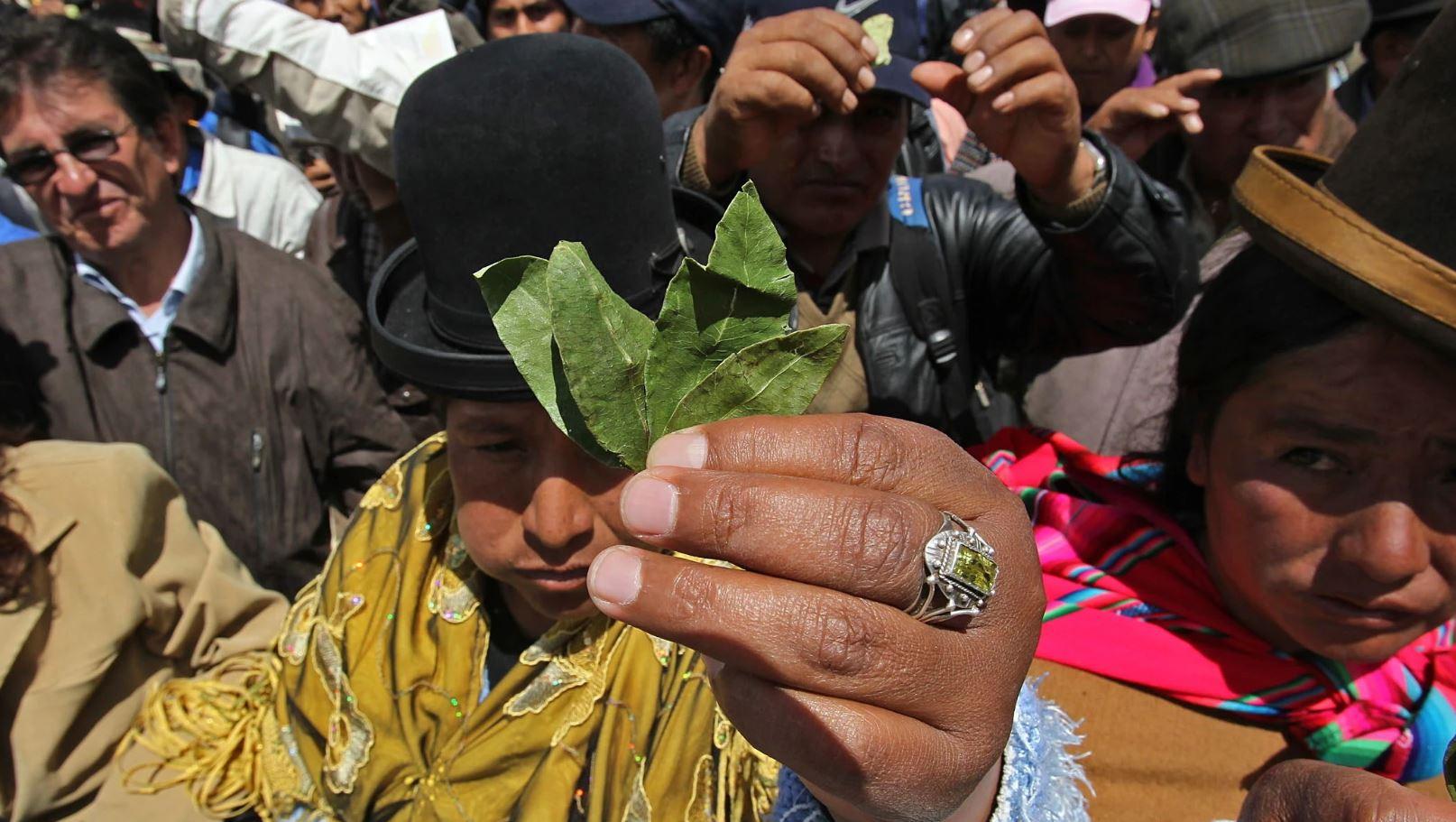 feuilles coca bolivie