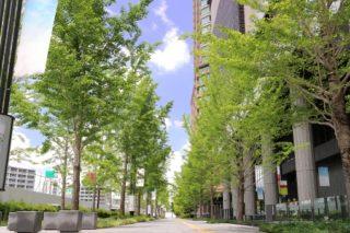 緑とビルの街並み