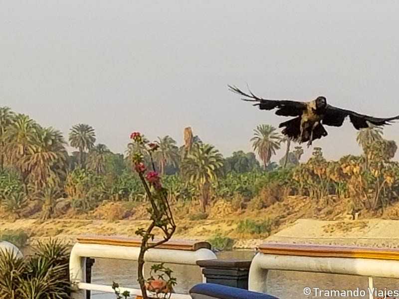 Crucero por el río Nilo – Parte II
