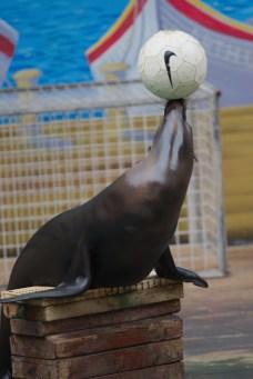 Sea lion3