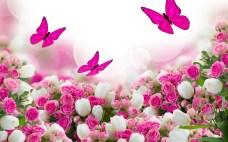 white-rose-flower-garden-wallpaper-9