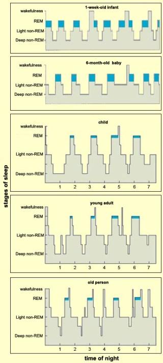 Sömncykler vid olika perioder i livet