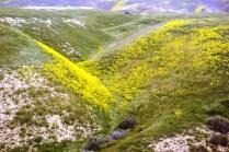 Soada Lake Spectacula (119)