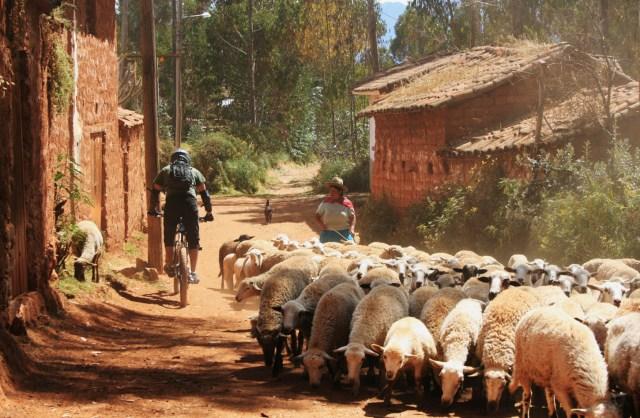 VTT sur les chemins de l'Inca du Pérou
