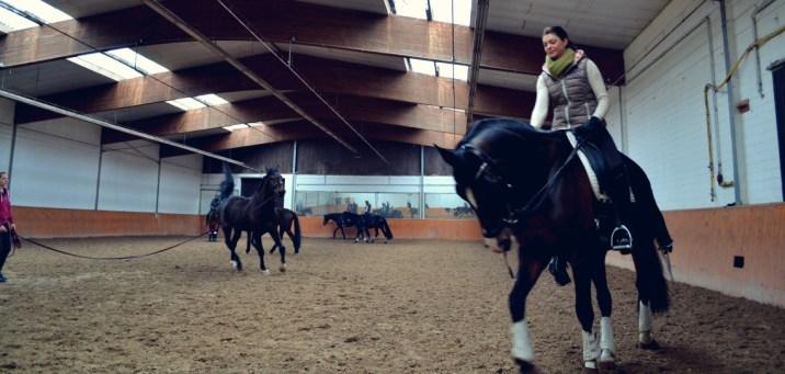 Volker Eubel Horses (16)